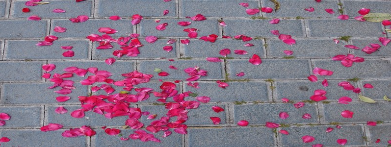 """""""Después de utilizar Prestashop, Palbin es un camino de rosas"""""""