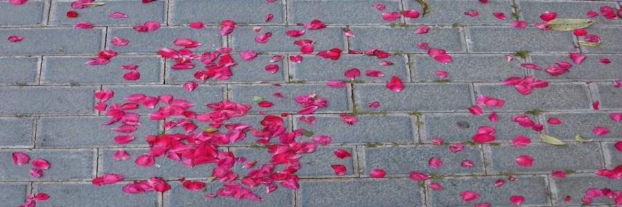 """""""Después de utilizar Prestashop vuestra plataforma es un camino de rosas"""""""